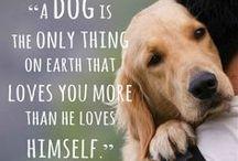 Animal lover / Until one has loved an animal, a part of ones soul remains unawakened. / by Kirsten Jayd Korevaar