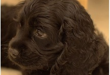 Puppy Love / by Kristin Cruse