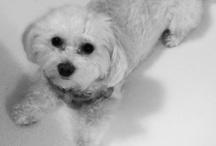 Animals / Husky obsessed animal lover.  / by Mackenzie