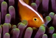 Fish / by Linda Busta