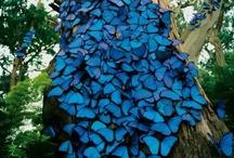 Butterflies / by Linda Busta