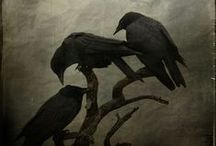 """Wings / Quoth the raven, """"Nevermore"""". / by Julia Olson"""