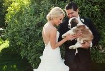 Furry Friends / Ways to Incorporate Pets into a Wedding or Event