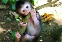 Cute Animals / Zbiór zdjęć najsłodszych zwierząt na świecie :)