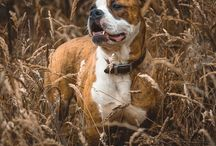 Dog photography / A small collection of my own work with dogs in the last few months.