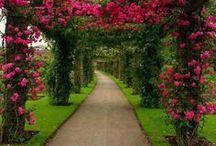 růžové zahrady