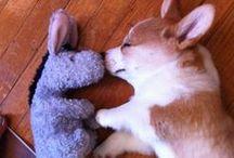 Cutie Pies!!