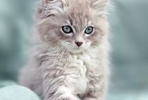 I Just Love Cats!! / Cats, cats, cats!!