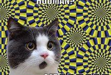 Funny Cat Memes / In dire need to laugh? Find your funny cat memes here! Dank cat memes. Hilarious cat memes. Popular cat memes. Top cat memes. High quality cat memes. Original cat memes.