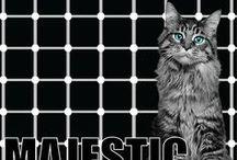 Majestic Cat / Get awe in their majesty! Elegant and majestic cat to flutter your heart. Majestic cat pics. Beautiful cat pics. Handsome cat pics. Elegant cat pics. Awesome cat pics.