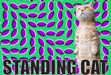 Standing Cat Pictures