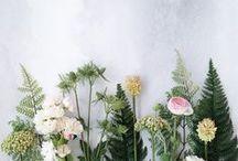plant lyf