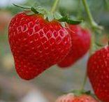 s いちご strawberry