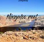 Australia - Ningaloo Reef / Travel inspiration