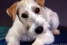 my dog / Axel Daisy Star