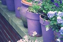 jardin / by marie
