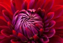 Fabulous Florals / door Meredith Pharis