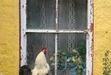 Farmhouse French / by Gayle Seebeck Christensen