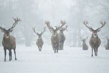 Christmas / by Kimberly Haggen