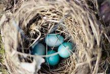 Birdies / by Kimberly Haggen
