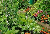 gardening / by Kimberly Haggen