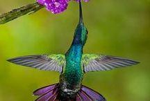 It's Alive (or not)- Birds / by Kris Fiori-Antijunti