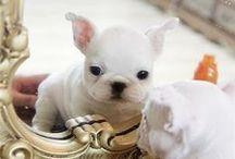 puppies & love
