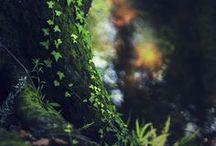 Voyage - Arbres et forêts