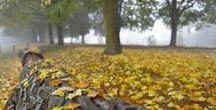 L'automne sur la Métropole / Avec ses couleurs changeantes, teintées de rouge, de jaune,  de vert et beaucoup d'ocres, la Métropole rentre dans la période automnale et présente un tout autre visage.