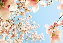 Spring ;)
