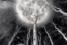 moonlight !!!!