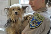 Pets Rescued by the SPCA for Monterey County / Every day, thousands of animals are neglected, abandoned and abused. The SPCA for Monterey County has been at the heart of animal rescue since 1905.