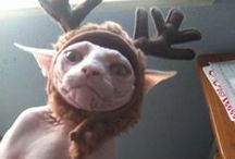 Just Fur Fun / Because sometimes pets just make you laugh