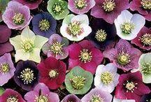 { research: flowers } / by Angela (Jinselli) Glaubitz