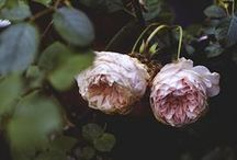 flora / by Lindsey Twigg