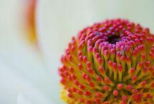 | Macro Flowers |