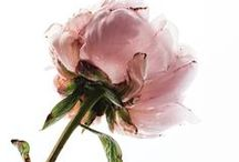 Florals / Stunning flower inspiration.