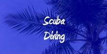 Scuba Diving / Best places to Scuba Dive by other divers.  Great dive shops, locations, prices, and the amazing creatures to see underwater!
