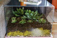 INDOOR PLANTS / Beautiful plants