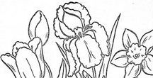 Coloring Pages / Pages to print and color or paint or to use as designs for other projects.