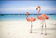 Aruba / For amazing holidays visit Aruba this year. Find out more about Aruba holidays now with Purple Travel: http://bit.ly/1l0QU0A