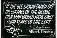 PLATFORM ▲ b•e•e•s / A GLOBAL Pollinating Insect of a Social Colony gathering Honey ▼  disappearance  ▼  motive for action  ▼  decisions                       BOYCOTT PESTICIDES & INSECTICIDES