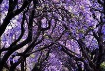 Our favourite colour is purple! / Our fave colour!  / by Purple Travel