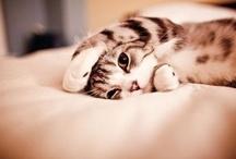 cat ^.^