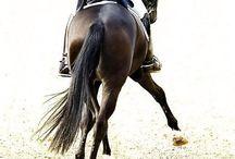 Horsey world