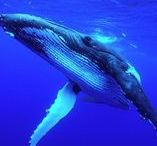 Nature / Ecology, nature, interesting events, natural phenomena.