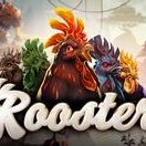 Rooster (Video Slot from Spinmatic)