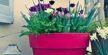Creare un giardino in terrazza