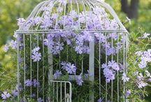 Flower bird cages