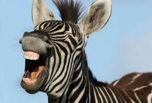Laugh on / by Janice McClard